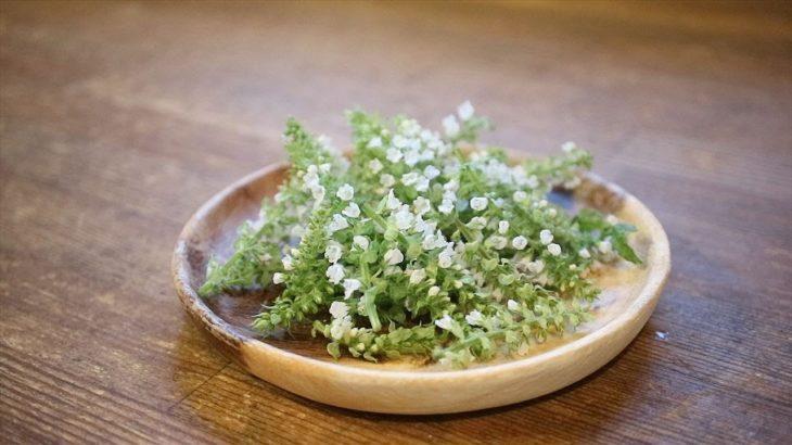 【簡単料理レシピ】シソの花の天ぷら