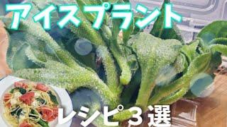 【晩ご飯つくる】アイスプラントで3レシピ【簡単料理】