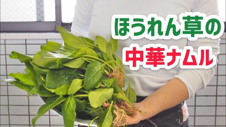 【主婦の簡単料理】ほうれん草の中華ナムル【おつまみレシピ】