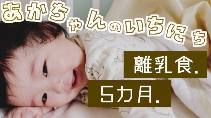 【ルーティン】 離乳食も 2児ママの赤ちゃんの1日 主婦の育児家事 癒し 生後5ヶ月 2歳差 お昼寝 遊び baby family mommy Routine