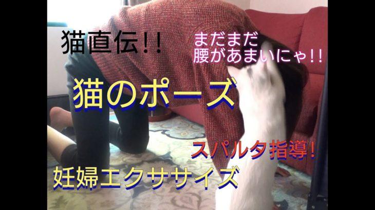 猫によるスパルタ指導‼妊婦ママのモーニングルーティン!?【猫のポーズ】
