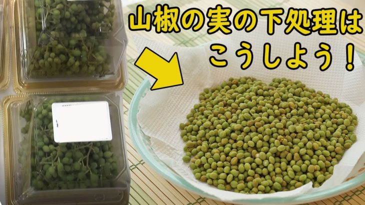 山椒の実の下ごしらえと保存はこうしよう!これで1年間いつでも使えます♪ 料理 レシピ 簡単