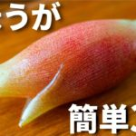 【日本酒や焼酎に合う!】みょうがを使った簡単おつまみレシピ3品~3 Japanese ginger~