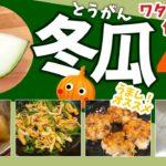 冬瓜(とうがん)料理4品【わたから皮まで使い切る!冬瓜レシピ】Winter gourd recipe
