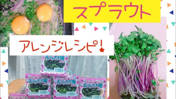 #お家時間#レシピ簡単#お料理 【忙しくても取りたい!食物繊維とタンパク質!!!!スプラウトの簡単アレンジ】