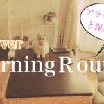 【平日ver】子育てママと保護猫のモーニングルーティン