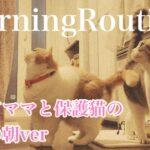 【休日ver】子育てママと保護猫のモーニングルーティン