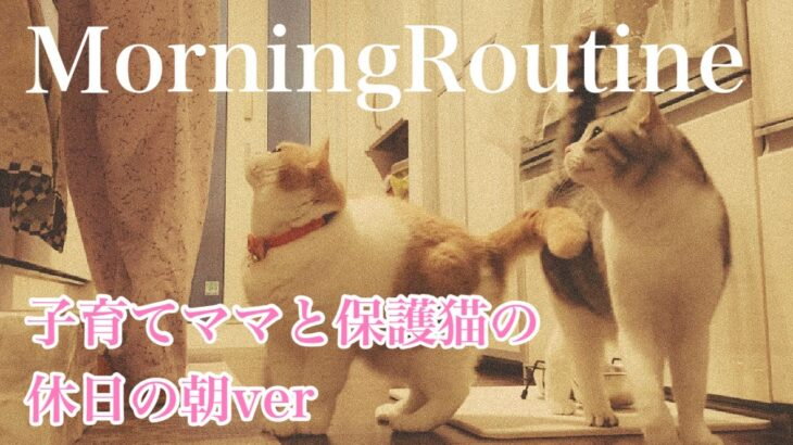 子育てママと保護猫のモーニングルーティン休日ver