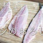 【アジのさばき方(三枚おろし)】のレシピ・作り方