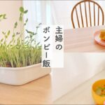 【節約v log】主婦のボンビー飯【節約生活】
